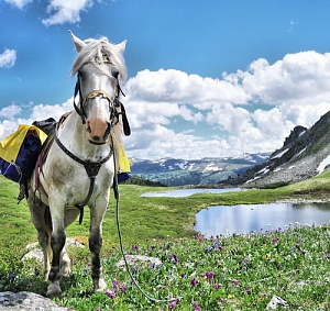 Russian Altay, Siberia. Horseback riding trip Karakol'skie Lakes (loop ride)