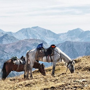 Russian Altay, Siberia. Horseback riding trip «Altai Mountains at a glance»